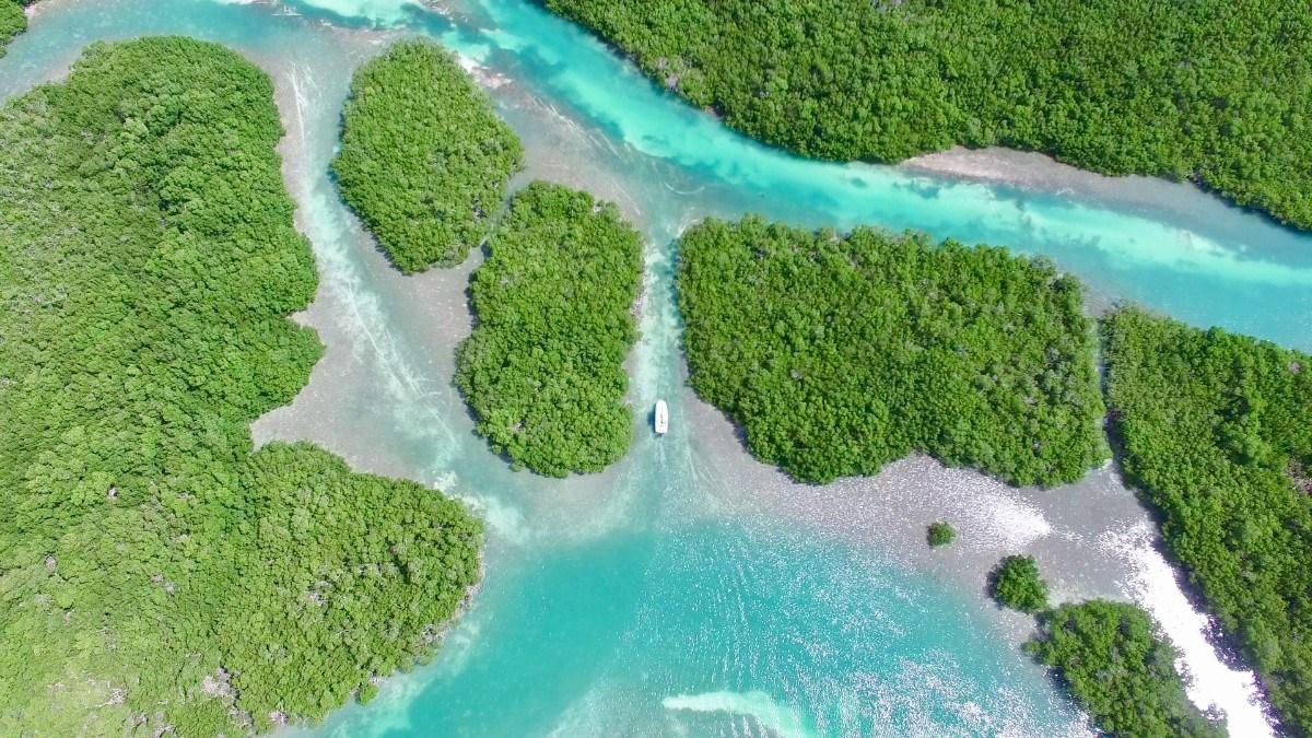 aerial boat in mangroves2